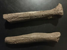 Special Bundle packageCastelnau  / Tibia & Humerus replica, Museum Artifact
