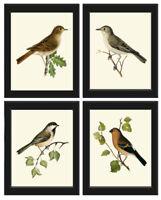 Unframed Bird Print Set of 4 Antique Vintage Birds Home Decor Picture Wall Art