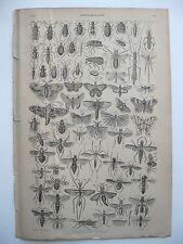stampa antica old print ESAPIDI ENTOMOLOGIA ZOOLOGIA INSETTI FARFALLE 1861