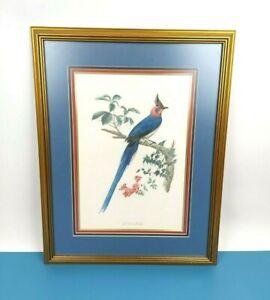 Vintage Jacques Barraband La Pie De Collie Framed Matted Bird Print