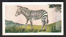 Zebra 60+ Y/O Ad Trade Card