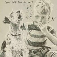 1945 Jack Russell Terrier Dog Boy Dennis Morgan art decor Pard vintage print ad