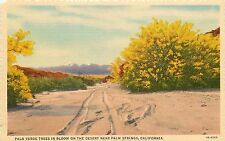 Linen Postcard Willard Palm Springs CA Palo Verde Trees in Bloom on the Desert