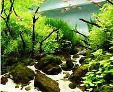 50 SEMI DI PIANTE MARINE PER ACQUARIO 50 AQUATIC PLANTS SEEDS FOR AQUARIUM