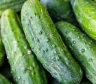 SPACEMASTER BUSH CUCUMBER SEEDS 30+ Vegetable GARDEN pickling FREE SHIPPING