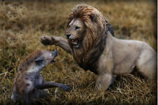 LIMITED Nanmu Mr Z Thundering Rage 1/12 Scale African lion VS Spotted hyena Toy