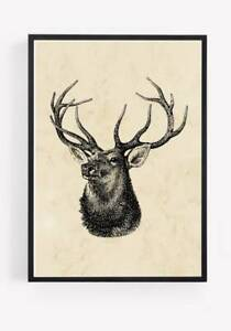 Vintage Stag Deer Print Picture Wall Art Unframed home Decor A4 1