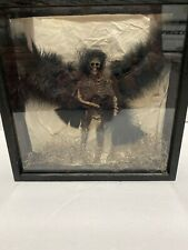 Shadowbox Skeleton With Wings