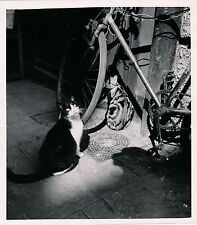 Chat Bicyclette c. 1950 - DIV 3993