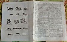 1784 Ancienne Gravure Estampes EO.Lézard Caméléon Scinque Dragon Gecko Salamandr