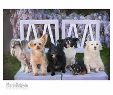 Small DOGS on lavendar CHAIRS n front of WISTERIA VINES fine ART Pet photography