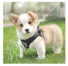 senye Cat Harness with Leash,Puppy Dog Training Leashes,Adjustable Soft, Size S