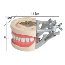 DENTAL TYPODONT Standard MODEL 200 WITH REMOVABLE TEETH 32pcs soft gum