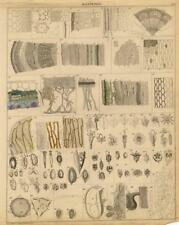 1843 OKEN HC LITHOGRAPH plant anatomy: cells, stalk, seeds, pollen, germs, ...
