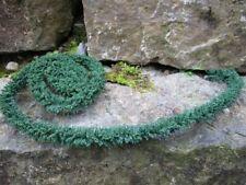 Original Jordan Hecken blühend dunkelgrün länge 100cm Ø ca.1cm Spur N Top