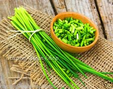 HERB - CHIVES Thin Chicks - 1200 seeds - Fantastic garden balcony herb
