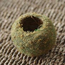 Moss Ball BONSAI KOKEDAMA Natural Green Sphagnum Moss Substrate Home Decoration