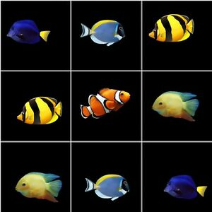 BATHROOM KICTHEN TILE STICKERS TROPICAL AQUARIUM FISH STICKERS 10 IN A PACK ACE