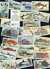 "NORTHERN CO-OP TEA 1965 SET OF 25 ""WONDERS OF THE DEEP"" TRADE CARDS"