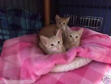 SPONSOR KITTEN SISTERS HELP FEED SPAY FERAL CAT RESCUE Rec Color PHOTO