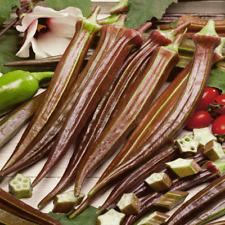 100 Red Burgundy Okra Seeds - Everwilde Farms Mylar Seed Packet