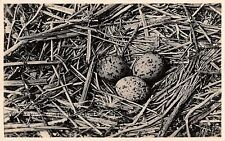 BR74946 twigmoor gull ponds egg  scawby uk real photo lincs