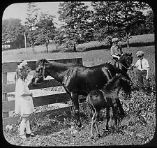 Glass Magic Lantern Slide Children With Shetland Pony & Foal C1910 Photo Usa