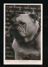 Dogs BULL DOG Nuthurst Doctor Used 1911 RP PPC by Rotary