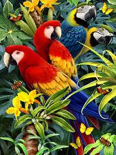 Malen nach Zahlen PJS83 Papagei