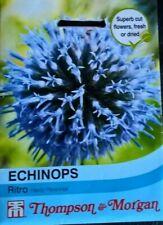 1 Blu impollinatore pianta perenne IN VASO 9cm Echinops ritro Baby Globes
