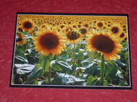[Photography - Chasseur Images ] Guy Sizes S,M,L Catez (1947-2016) Flowers & MG