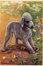 Bedlington Terrier - Matted Dog Art Print - German / New U