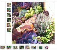 100 MIX  Rare colorful succulent plant Succulent Cactus Seeds lotus Lithops