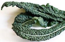 Kale, LACINATO (DINOSAUR) 100 Heirloom Non-gmo Seeds -EAT HEALTHY- FREE SHIPPING
