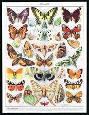1928 Butterflies, Oleander Hawk Moth, Antique Entomology Print - Larousse