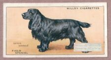 Field Spaniel Dog Canine Pet Vintage Ad Trade Card