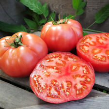 Organic Damsel F1 Tomato 20 Fresh Seeds Sweet Rich Tangy High Resistance 2017