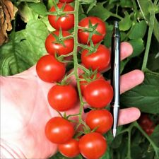 200 Seeds Red Cherry Tomato Seeds Vegetable Sweet Garden Greenhouse