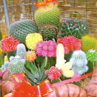 Great Durability Strong 1 Bag 10 Seeds Mixture Of Cactus Flower Color Plant
