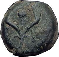 Jewish King ALEXANDER JANNAEUS Ancient Jerusalem WIDOW's MITE Bible Coin i64167