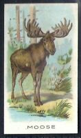 WILLS OTHER OVERSEAS-ANIMALS & BIRDS (WITH SERIES TITLE)- MOOSE
