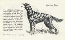 Gordon Setter - 1945 Vintage Dog Print - G. Cook