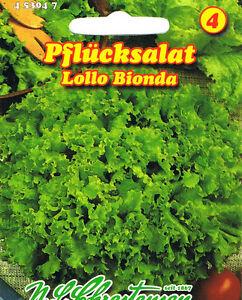 Pflücksalat  'Lollo Bionda'  Schnittsalat  Samen 453047 Salat