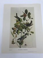 John James Audubon Folio Plate 197 Blackpoll Warbler Limited 750