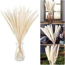 30 Pcs Dried Pampas Grass | Natural Colour Dried Flowers for Flower Arranging
