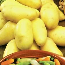 """Seeds potatoes """"farmer"""" early variety from Ukraine"""