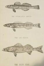 Northern Pike by John W FISH ART PRINT Golden Fishing Wildlife Poster 14x32