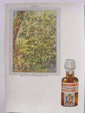 9918 AK homöopathische Heilmittel Reklame Dr. Madaus
