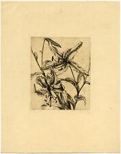 Antique Print-BOTANICAL-LILY-Pijpers-ca. 1920