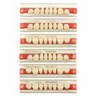 3Set Dental Acrylic Resin Denture Upper Anterior Teeth Shade Color A1/A2/A3/A3.5